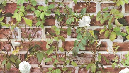 Papiertapete Steintapete rot Modern Steine Blumen & Natur Authentic Walls 2 721