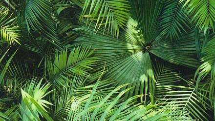 Vinyltapete Designpanel grün Modern Blumen & Natur Bilder Pop.up Panel 3D 441