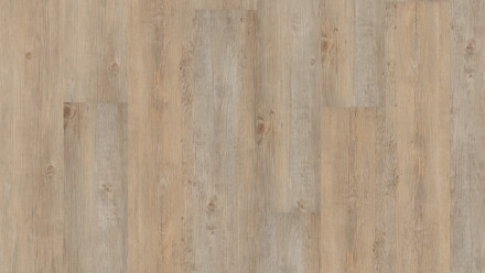 planeo Dekowall - Wandvinyl Sibirian Pine